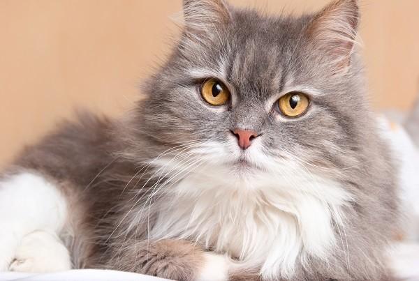 向愛媽謊報條件領養「貓咪1死1殘」 雲林碩士生被判3個月