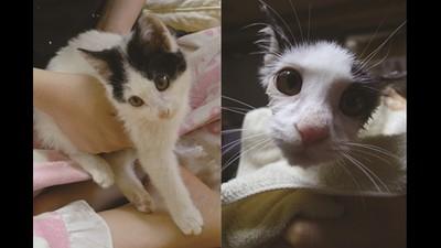 女兒趁爸爸出差帶了一隻貓回家,回家發現牠有腦麻..