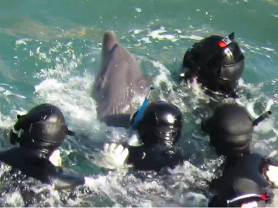 人類是賊!水族館「綁架幼豚」拆散親骨肉...海豚媽椎心號哭
