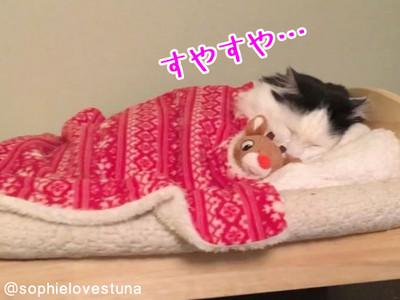 睡覺時間到!喵皇自動抱娃娃窩床 還真以為自己是人類~