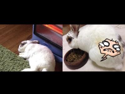 寵物兔暖爐前睡倒,起身主人慘叫...怎麼多一色?!