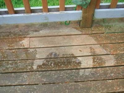 下雨了!喵喵渾圓睡姿被地板出賣