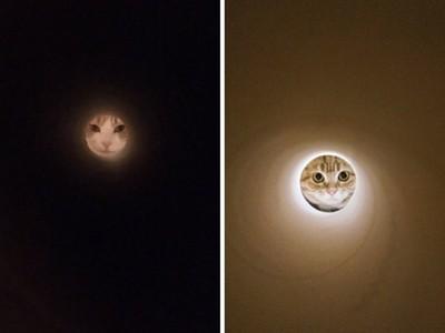 把貓咪送上月亮!聰明人才拍得出的「喵星人滿月」