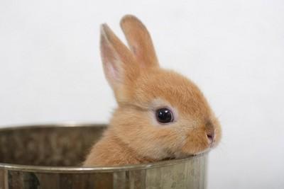 家有可愛兔寶? 養兔子「10注意事項」...抱抱也要小心