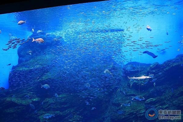 仙台 水族館