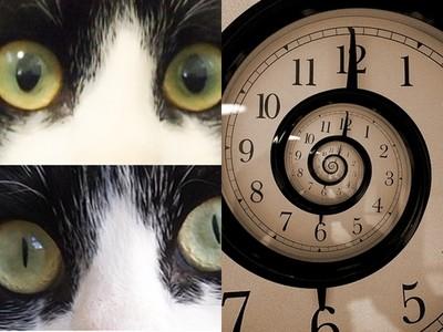古書記載「貓眼能讀時間」!《仁王》服部半藏的貓錶係金ㄟ