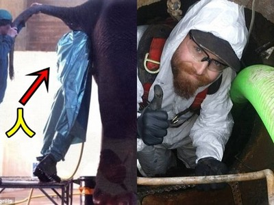 世上最虐13種工作…爬入大象肛門、檢查45年化糞池還是小case