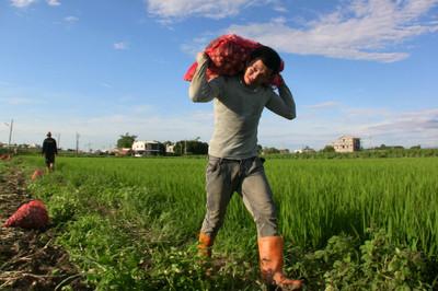 陳樂融/《再見,可愛陌生人》:台灣農業亡命之徒的哀歌