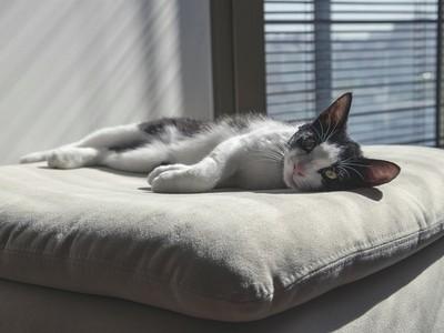 睡錯枕頭讓你孤獨一生 無彈性、泛黃小心招爛桃花!