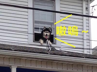 最呆萌救援!月月趴窗想逃家,消防員1小時救牠兩次