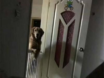 守門口直盯…浪浪每晚不睡覺 主人得知原因後哭慘把牠抱進房