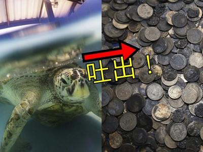 5公斤銅板絞爛內臟!網揭「海龜活撲滿」真相:殘忍餵食只為觀光財