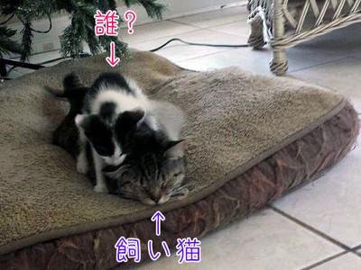 喵主子外出散步,回來竟然多隻小貓!你把誰家小孩拐來啦?