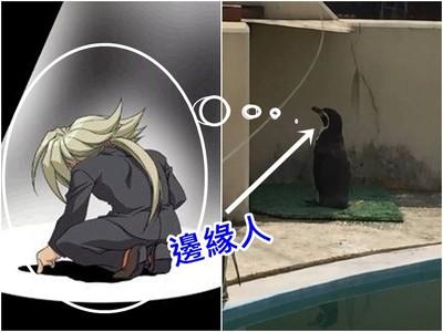 愛面壁沒朋友「邊緣人」企鵝…反而成為動物園人氣角色