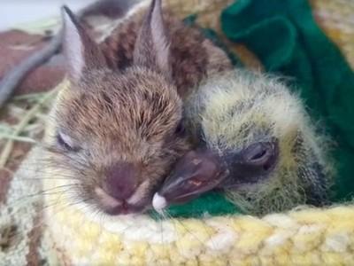 跨物種青梅竹馬!兔子鴿子同住保溫箱,兩個孤兒緊緊相擁