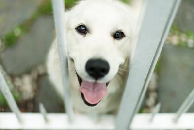 好準!一張圖看出你「潛在性格」... 看到狗狗是暖男?