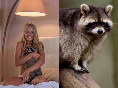 浣熊拍完「色情廣告」後愛上摸乳 園方:羞辱動物告到底