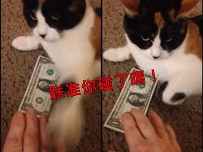 護錢心切...奴才覬覦鈔票,「守財喵」零秒出肉掌攔截