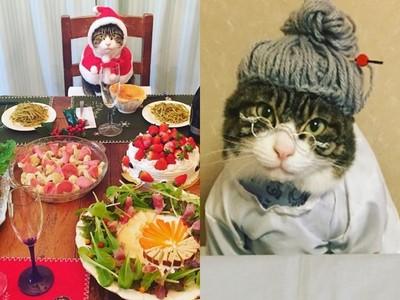 今天媽媽不在,喵星人來上菜!怎麼主廚比料理還吸睛?