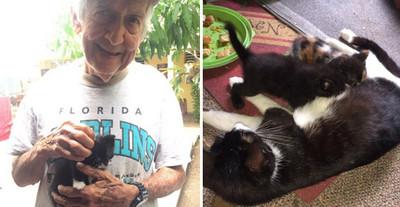 奶奶不喜歡貓,愛貓爺爺在車庫偷養一整窩,還是被發現了..