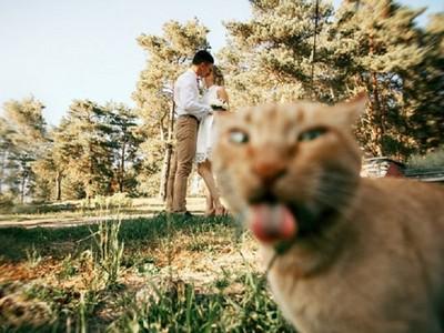毀三觀壞意境貓咪搶鏡照 主角一定要是本喵皇啊(ΦωΦ)