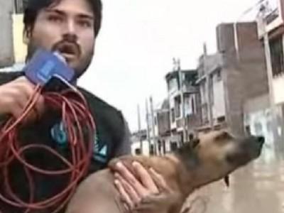 全城大淹水狗狗受困 暖男記者連線一半撈牠上岸
