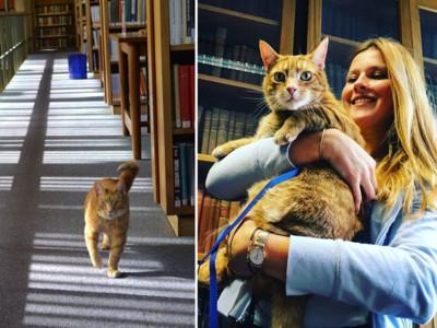 「三腳貓」被圖書館收留成劍橋吉祥物 考試前見牠要預約