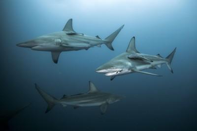 13歲男被咬血狂流 鯊魚尾隨上岸