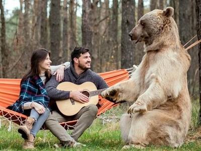 好大一顆「電燈泡」!情侶森林約會,大熊亂入搶鏡頭