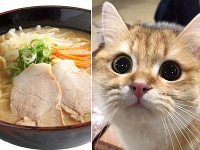 超無聊!用「拉麵油」畫隻貓..吃完了就快走啦