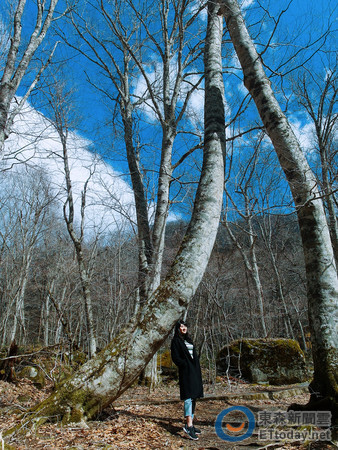 巨樹 百 景