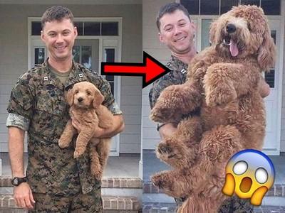 軍人爸離家一年驚覺「小狗變毛怪」 網:給阿嬤帶大都這樣