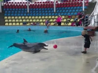 小朋友的球球掉到水裡去 海豚扭腰撿回來