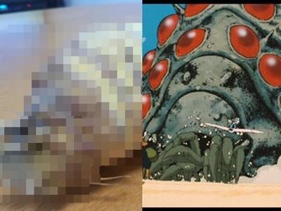 來自地獄的食材!網友做菜時驚見「王蟲」入侵