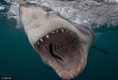 男童釣魚 下秒大白鯊竄出一口吃掉