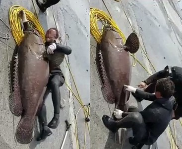 禁區殺龍膽石斑 潛水客還PO炫耀