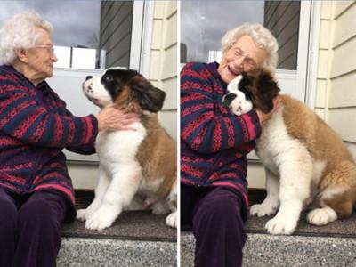 呆萌毛鄰居來等門,93歲獨居老奶奶,有大狗的日子都是好日子