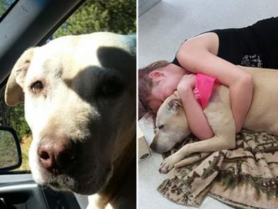 安樂死前24小時…主人陪愛犬最後一次兜風,照片心碎記錄全程