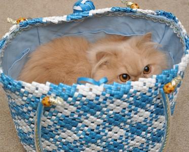 不把你當人看? 貓咪眼中的你...是一隻動作遲鈍的巨貓