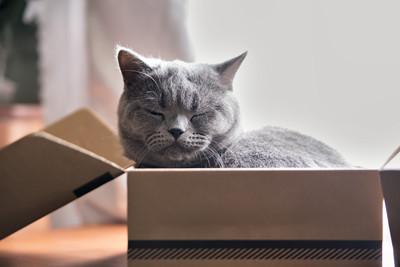 就是要塞好塞滿!貓咪喜歡「擠紙箱」的4個原因...萌萌噠