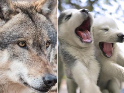 測出你上輩子是OO動物!你可能是月月、野狼或是...?