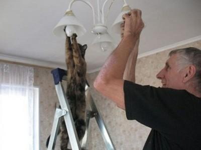 「我家貓咪好像投錯胎了…」 主子人模人樣瞬間讓貓奴笑翻