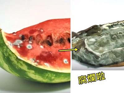 食物「療癒腐敗」縮時攝影,看到西瓜塌成一團那感受太奇妙