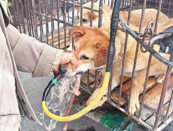 中國狗販在狗兒嘴裡強灌水(圖/翻攝自YouTube)