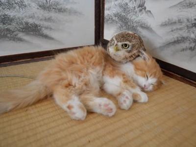 喵皇魅力無法擋!貓頭鷹頭靠毛茸茸身軀:皇上您睡,這裡我來監視