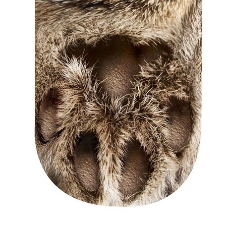 「貓掌襪襪」看起來超怪小 但…以後你可以捏自己的肉蹼耶!(圖/取自BoredPanda)