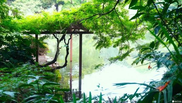 東京新宿御苑。(圖/matcha)