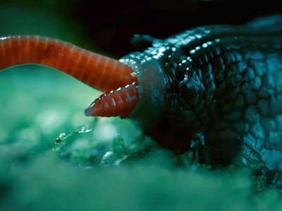 濕黏身軀伸出6000顆牙齒..你想不到「地表最像惡魔生物」竟是蝸牛