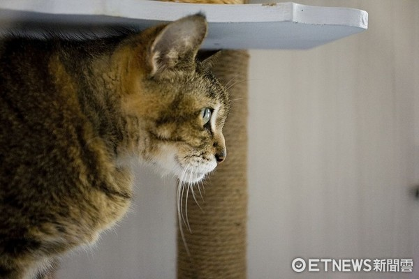 ▲使用6mm加粗的天然劍麻繩整組包覆的貓抓柱。(圖/信義居家提供)