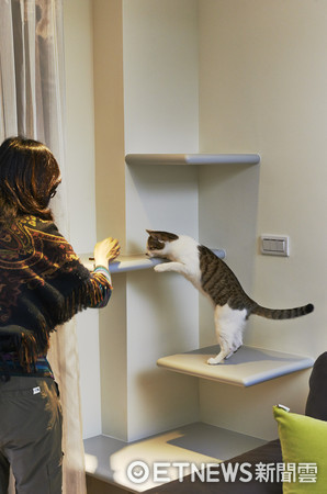 ▲書櫃結合貓咪最愛的跳台、貓抓柱或貓屋。(圖/信義居家提供)